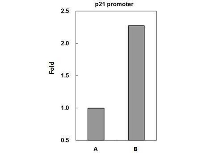 Chromatin Immunoprecipitation (ChIP) image for anti-p53 antibody (Tumor Protein P53) (Center) (ABIN2855525)