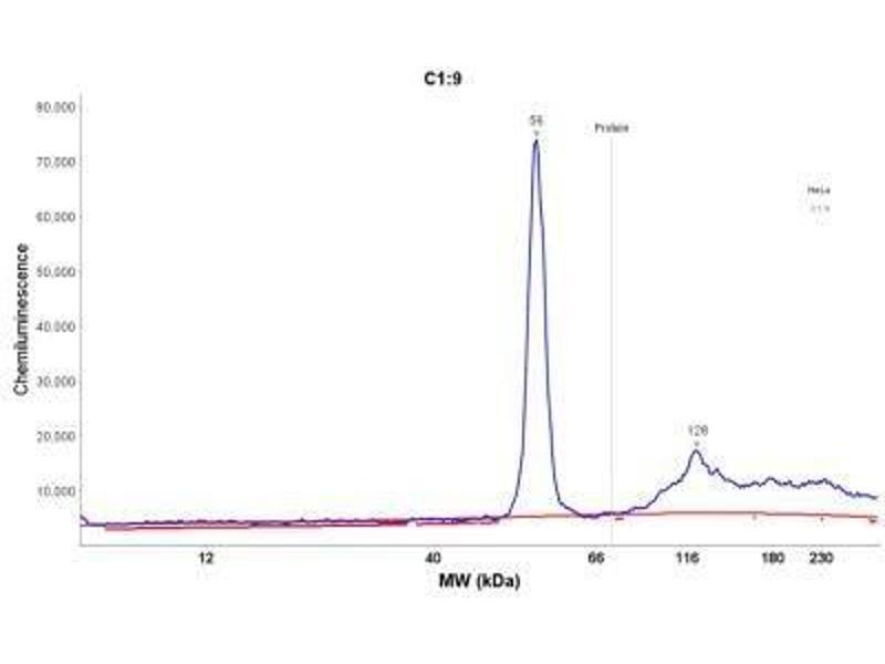Simple Western (SimWes) image for anti-Keratin 18 (KRT18) antibody (ABIN4302637)