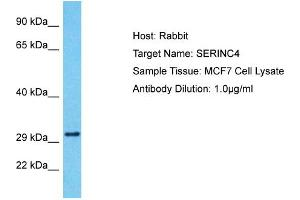 Image no. 1 for anti-Serine Incorporator 4 (SERINC4) (Middle Region) antibody (ABIN2791908)