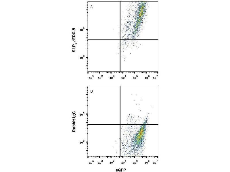 Flow Cytometry (FACS) image for anti-S1PR5 antibody (Sphingosine-1-Phosphate Receptor 5) (N-Term) (PE) (ABIN4897993)