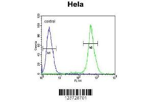 Flow Cytometry (FACS) image for anti-Emopamil Binding Protein (Sterol Isomerase) (EBP) (AA 1-30), (N-Term) antibody (ABIN652952)