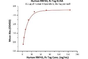 Image no. 3 for Ring Finger Protein 43 (RNF43) (AA 44-197) (Active) protein (Fc Tag) (ABIN7013543)