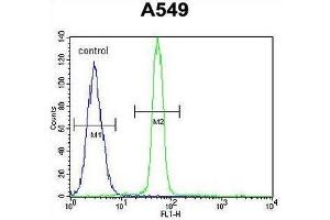 Flow Cytometry (FACS) image for anti-CREB1 antibody (CAMP Responsive Element Binding Protein 1) (AA 112-140) (ABIN951694)