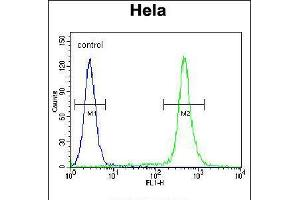 Image no. 2 for anti-Chromosome 18 Open Reading Frame 8 (C18orf8) (AA 34-66), (N-Term) antibody (ABIN5532845)