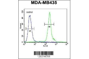 Flow Cytometry (FACS) image for anti-ZBBX antibody (Zinc Finger, B-Box Domain Containing) (AA 34-62) (ABIN654386)