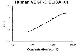 Image no. 1 for Vascular Endothelial Growth Factor C (VEGFC) ELISA Kit (ABIN6719977)
