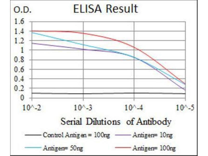 ELISA image for anti-Thrombopoietin (THPO) antibody (ABIN1844325)
