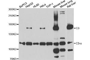 Western Blotting (WB) image for anti-Complement Component 3 (C3) antibody (ABIN3048517)