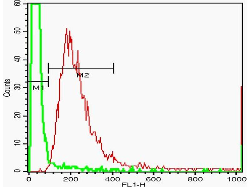 Flow Cytometry (FACS) image for anti-V-Erb-B2 Erythroblastic Leukemia Viral Oncogene Homolog 3 (Avian) (ERBB3) (AA 140-200) antibody (ABIN681358)