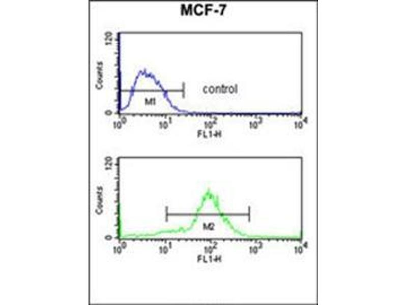 Flow Cytometry (FACS) image for anti-MOB2 antibody (MOB Kinase Activator 2) (AA 11-41) (ABIN953472)