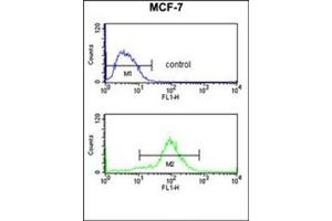 Flow Cytometry (FACS) image for anti-MOB Kinase Activator 2 (MOB2) (AA 11-41), (N-Term) antibody (ABIN953472)