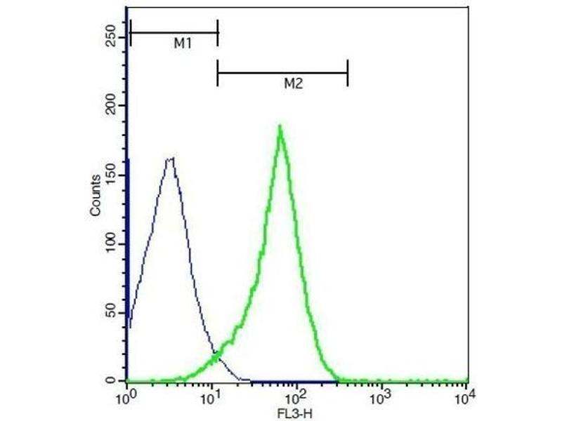 Image no. 2 for anti-Cadherin 1, Type 1, E-Cadherin (Epithelial) (CDH1) (AA 410-460) antibody (ABIN1387847)