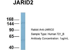 Image no. 1 for anti-Jumonji, AT Rich Interactive Domain 2 (JARID2) (N-Term) antibody (ABIN2787847)