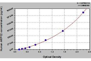 Image no. 1 for Actin Related Protein 2/3 Complex, Subunit 2, 34kDa (ARPC2) ELISA Kit (ABIN6974983)