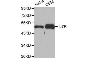 Western Blotting (WB) image for anti-Interleukin 7 Receptor (IL7R) antibody (ABIN3021791)