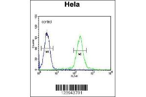 Flow Cytometry (FACS) image for anti-UDP-N-Acetyl-alpha-D-Galactosamine:polypeptide N-Acetylgalactosaminyltransferase 4 (GalNAc-T4) (GALNT4) (AA 93-120), (N-Term) antibody (ABIN654149)