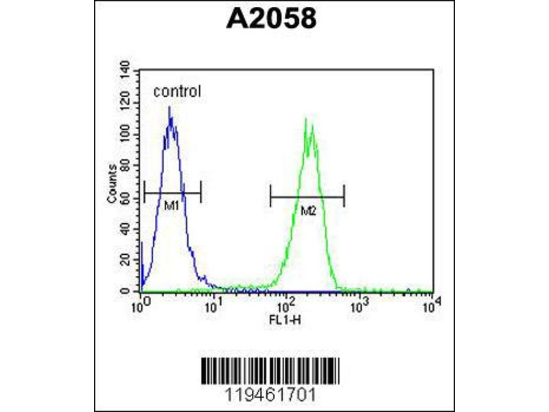 Flow Cytometry (FACS) image for anti-Annexin V antibody (Annexin A5) (N-Term) (ABIN2159132)