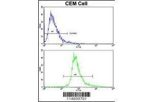 Flow Cytometry (FACS) image for anti-Brain-Derived Neurotrophic Factor (BDNF) (AA 206-236), (C-Term) antibody (ABIN392515)