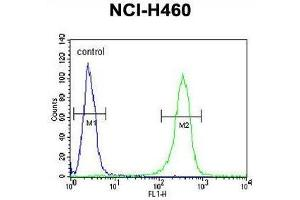 Image no. 1 for anti-Zinc Finger Protein 473 (ZNF473) (AA 185-215), (N-Term) antibody (ABIN955714)