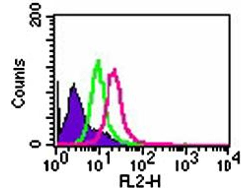 image for anti-Toll-Like Receptor 8 (TLR8) antibody (ABIN531990)