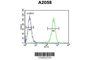 Image no. 3 for anti-Glutamine-Fructose-6-Phosphate Transaminase 2 (GFPT2) (AA 175-201), (Center) antibody (ABIN653230)