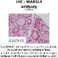 anti-MAD2L1 anticorps (MAD2 Mitotic Arrest Deficient-Like 1 (Yeast)) (AA 1-174)