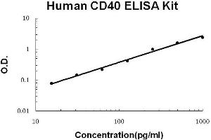 ELISA image for CD40 ELISA Kit (CD40 Molecule, TNF Receptor Superfamily Member 5) (ABIN921089)