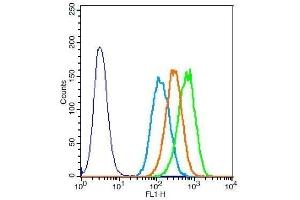Flow Cytometry (FACS) image for anti-Elastin (ELN) (AA 750-786) anticorps (ABIN734003)
