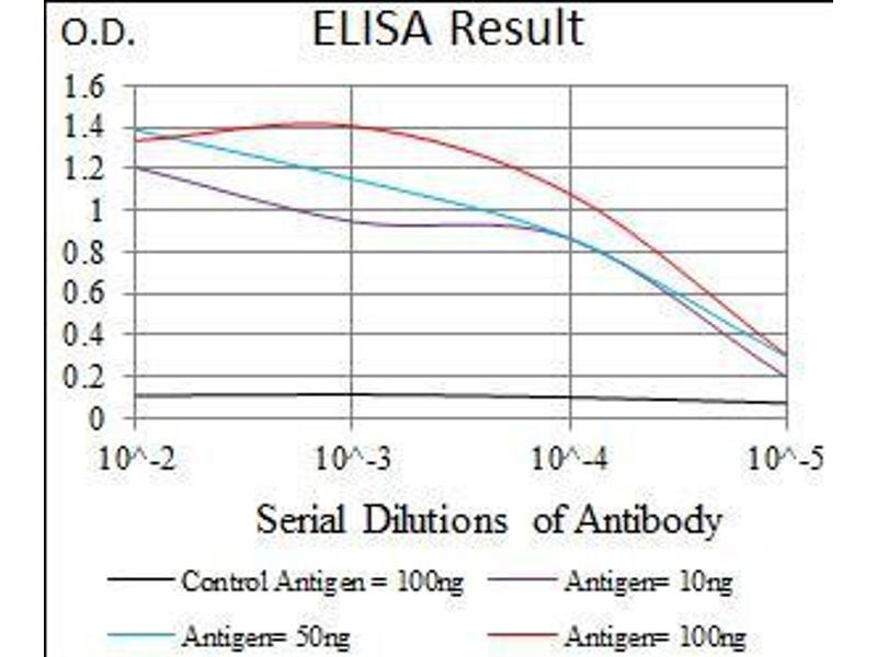 Image no. 1 for anti-Nestin (NES) (AA 419-588) antibody (ABIN1724749)