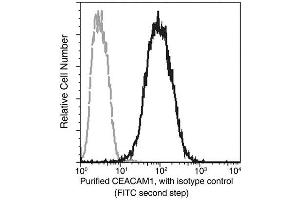 Image no. 1 for anti-Carcinoembryonic Antigen-Related Cell Adhesion Molecule 1 (Biliary Glycoprotein) (CEACAM1) (AA 1-428) antibody (ABIN1997563)
