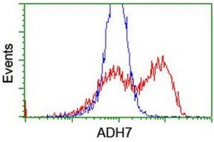 Image no. 1 for anti-Alcohol Dehydrogenase 7 (Class IV), mu Or sigma Polypeptide (ADH7) antibody (ABIN1496481)