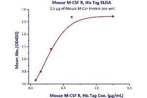 Image no. 1 for Colony Stimulating Factor 1 Receptor (CSF1R) (AA 20-511) (Active) protein (His tag) (ABIN4949179)