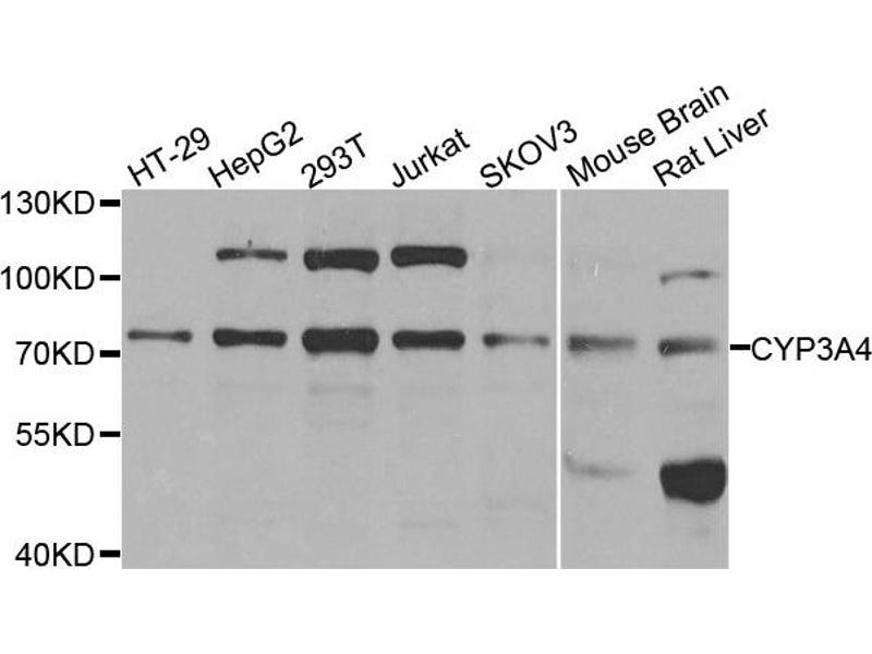 cyp 3 7 task 2 1 5-7 lastly, not all cyp assays are created the same  in one case, cyp testing  was requested for a suspected slow metabolizer, however.