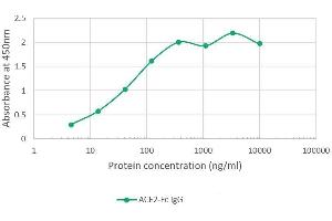 Image no. 2 for Angiotensin I Converting Enzyme 2 (ACE2) protein (Fc Tag) (ABIN6953063)