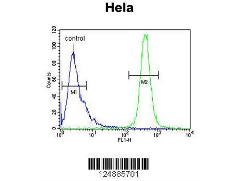 Flow Cytometry (FACS) image for anti-IMP3 antibody (IMP3, U3 Small Nucleolar Ribonucleoprotein, Homolog (Yeast)) (AA 156-184) (ABIN653856)