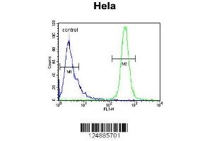 Flow Cytometry (FACS) image for anti-IMP3, U3 Small Nucleolar Ribonucleoprotein, Homolog (Yeast) (IMP3) (AA 156-184), (C-Term) antibody (ABIN653856)