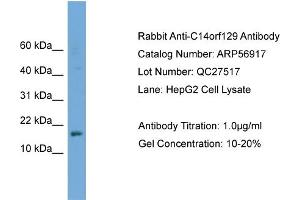 Image no. 2 for anti-GSK3B interacting protein (GSKIP) (Middle Region) antibody (ABIN2786971)
