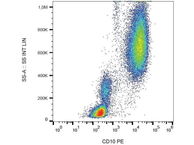 Image no. 2 for anti-Membrane Metallo-Endopeptidase (MME) antibody (PE) (ABIN93937)