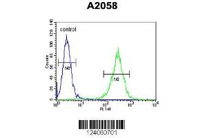 Image no. 3 for anti-Hydroxysteroid (17-Beta) Dehydrogenase 12 (HSD17B12) (AA 126-155), (Center) antibody (ABIN653300)
