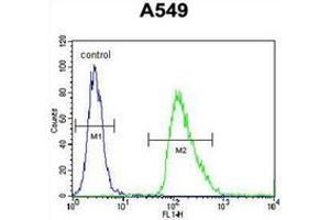 Image no. 1 for anti-Immediate Early Response 3 (IER3) (AA 45-73), (N-Term) antibody (ABIN952818)