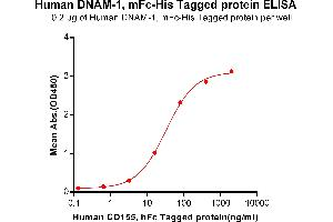 Image no. 1 for CD226 (CD226) protein (mFc Tag,His tag) (ABIN6961117)