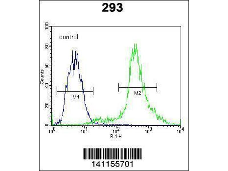 Flow Cytometry (FACS) image for anti-CTNNB1 antibody (Catenin (Cadherin-Associated Protein), beta 1, 88kDa) (N-Term) (ABIN1881239)