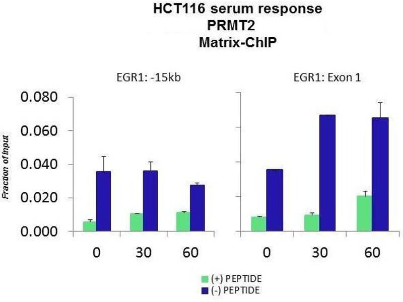 Chromatin Immunoprecipitation (ChIP) image for anti-Protein Arginine Methyltransferase 2 (PRMT2) (N-Term) antibody (ABIN2778662)