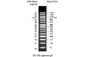 Image no. 1 for 50bp DNA Ladder (ABIN2868528)
