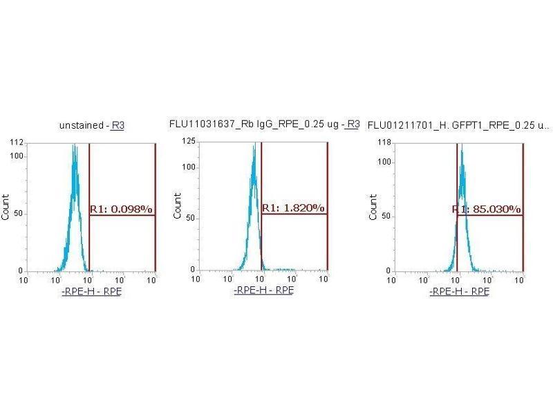 Image no. 1 for anti-Glutamine--Fructose-6-Phosphate Transaminase 1 (GFPT1) (AA 332-699) antibody (PE) (ABIN5568374)