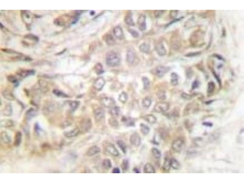 Immunohistochemistry (IHC) image for anti-Tumor Protein, Translationally-Controlled 1 (TPT1) antibody (ABIN408173)