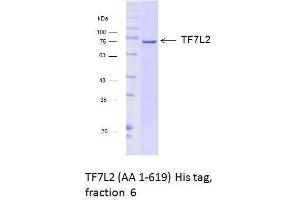 Size-exclusion chromatography-High Pressure Liquid Chromatography (SEC-HPLC) image for Transcription Factor 7-Like 2 (T-Cell Specific, HMG-Box) (TCF7L2) (AA 1-619) protein (His tag) (ABIN3095869)