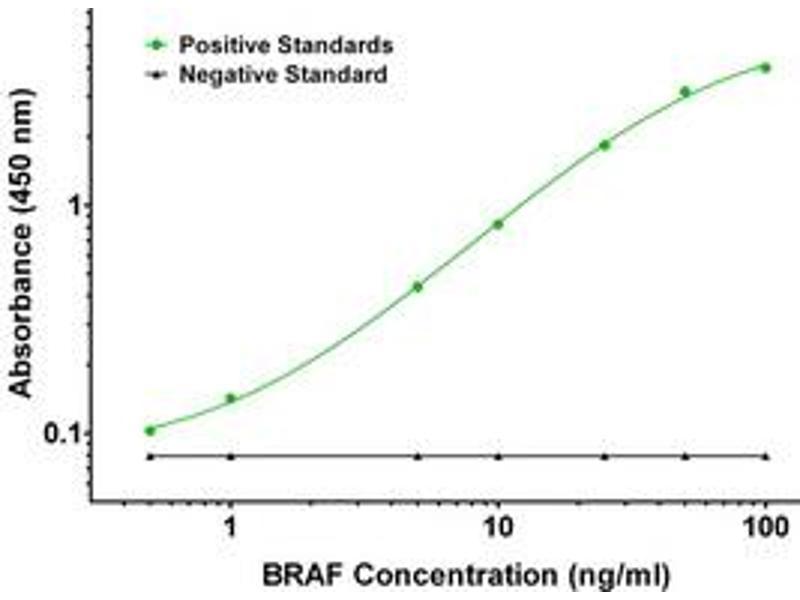 ELISA image for anti-V-Raf Murine Sarcoma Viral Oncogene Homolog B1 (BRAF) antibody (ABIN2671841)