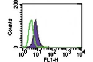Image no. 2 for anti-Toll-Like Receptor 6 (TLR6) antibody (ABIN531987)