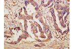 Immunohistochemistry (Paraffin-embedded Sections) (IHC (p)) image for anti-Toll-Like Receptor 6 (TLR6) (AA 340-380) antibody (ABIN749573)